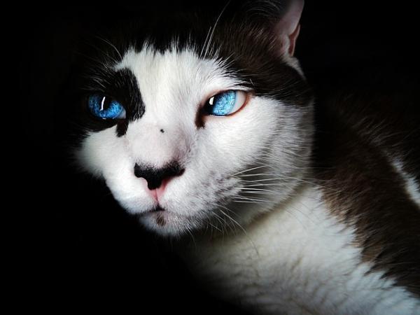 Los gatos no ven en blanco y negro