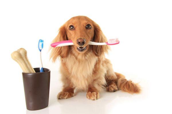 Cómo-limpiar-los-dientes-a-un-perro