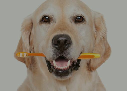 cuidado bucal de tu mascota
