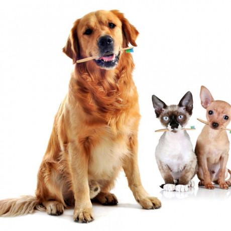 Perros y cepillos de dientes