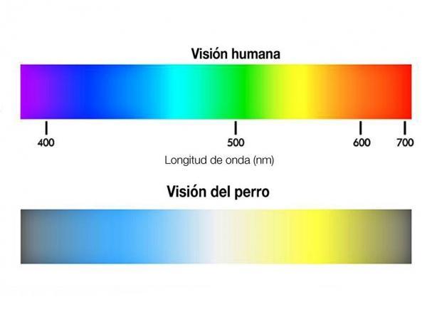 comparativa vision perro y humano