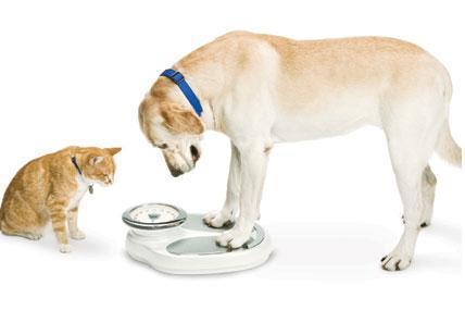 La obesidad de las mascotas