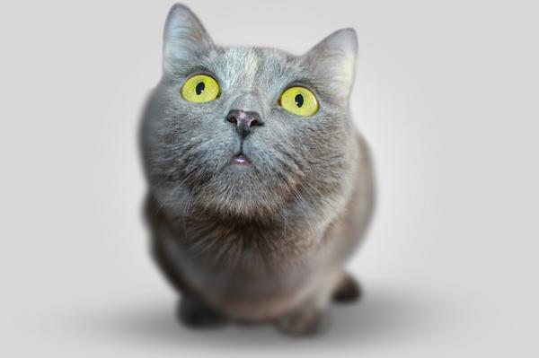 Cómo ven los gatos